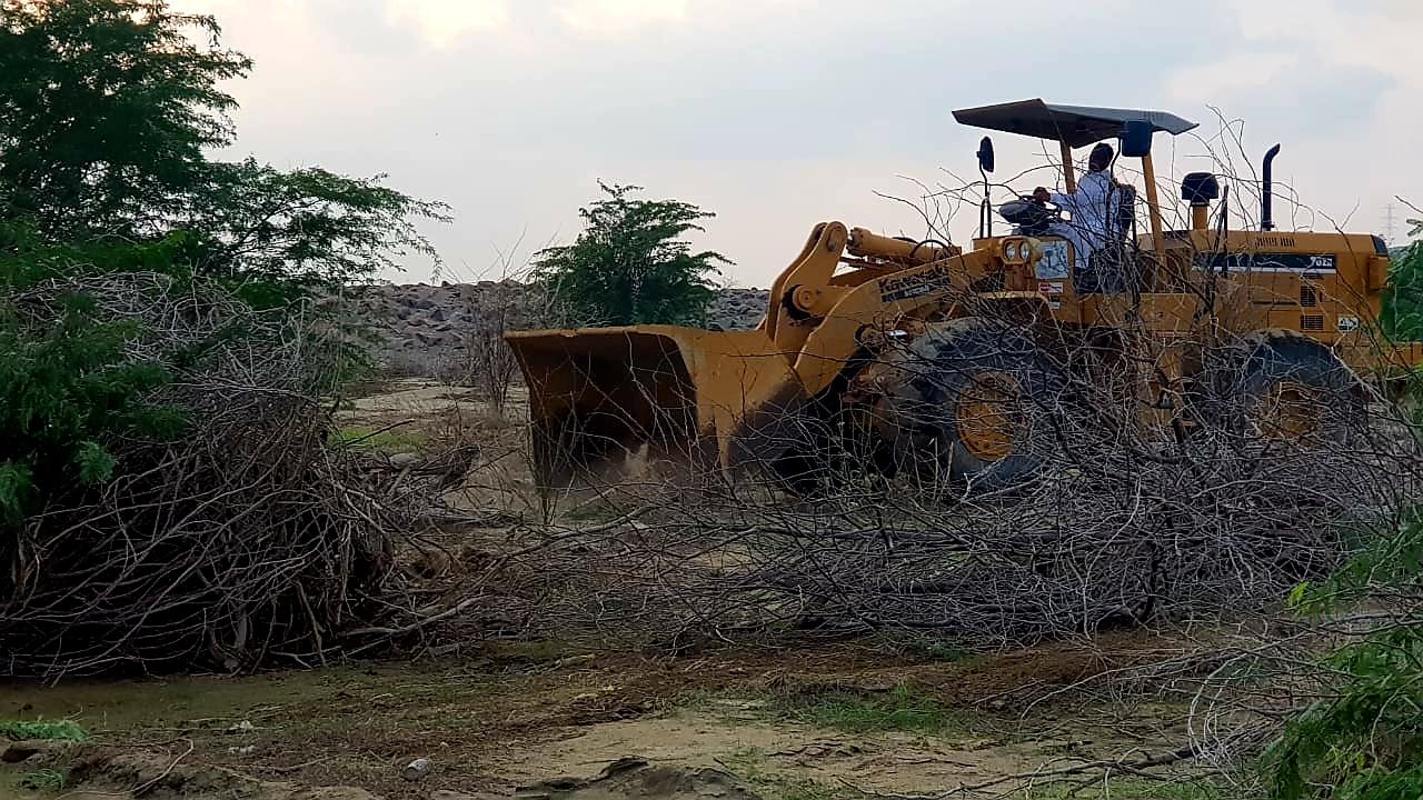 إزالة أشجار المسكيت في الليث