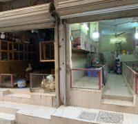 إغلاق 20 محلا عشوائيا للدواجن في جدة