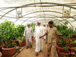 زيارة وكيل الوزارة لشؤون الزراعة مشاتل مكتب وزارة البيئة والمياه والزراعة بمحافظة جدة