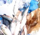 مصادرة و إتلاف أكثر 450 كجم أسماك ودواجن فاسدة في نطاق بلديه المسفلة الفرعية بمكة