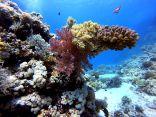 البيئة: الإنتاج السمكي في محافظة القنفذة 5500 طن سنويا